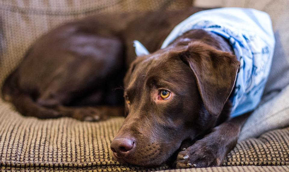 Hondengeur verwijderen uit bank