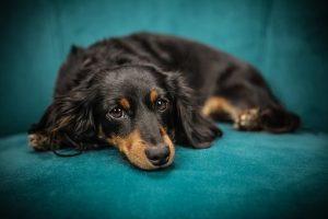 Hele schattige hond op bank